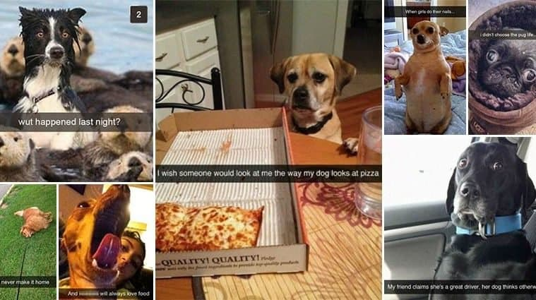 Snapchats For Dog-Lovers