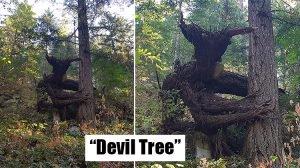 Trees That Look Like Something Else