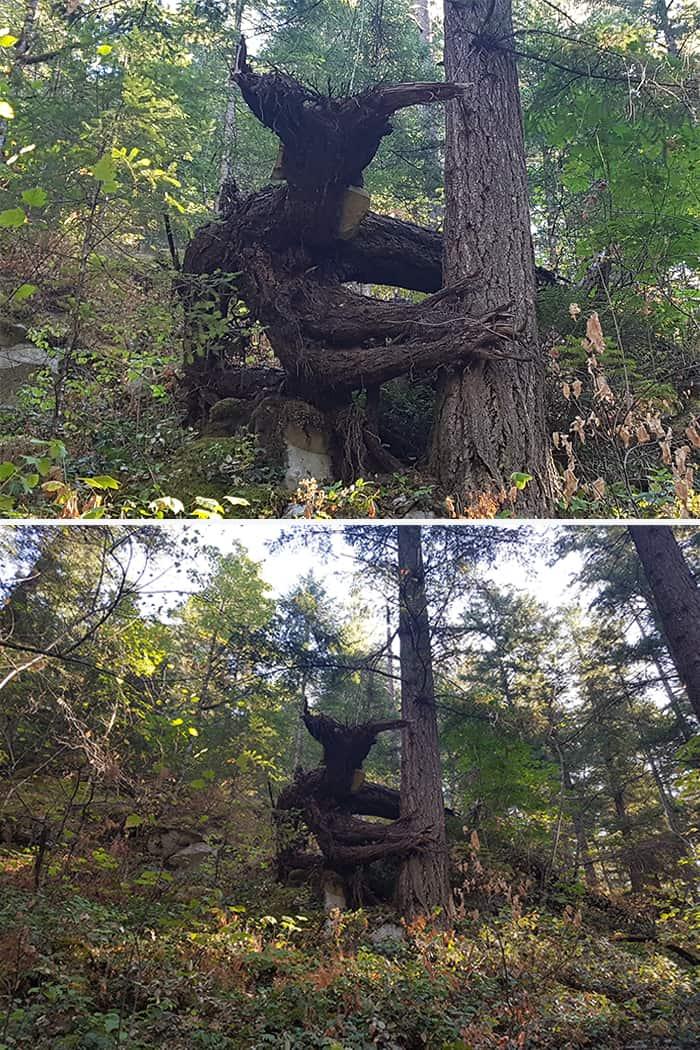 Trees That Look Like Something Else devil tree