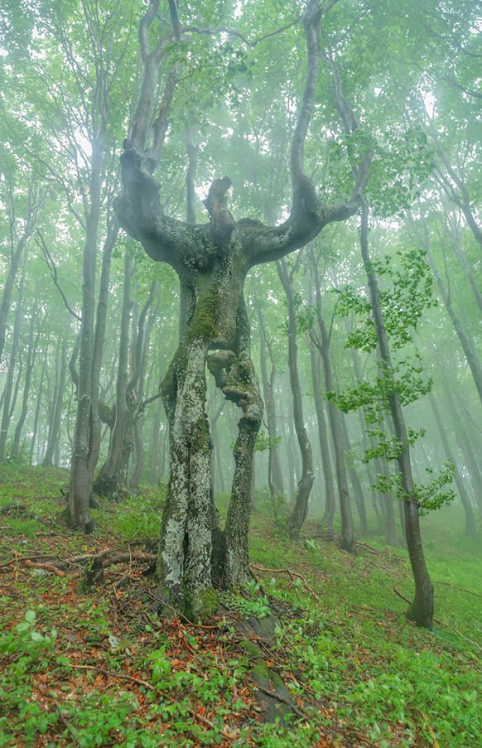 Trees That Look Like Something Else ent