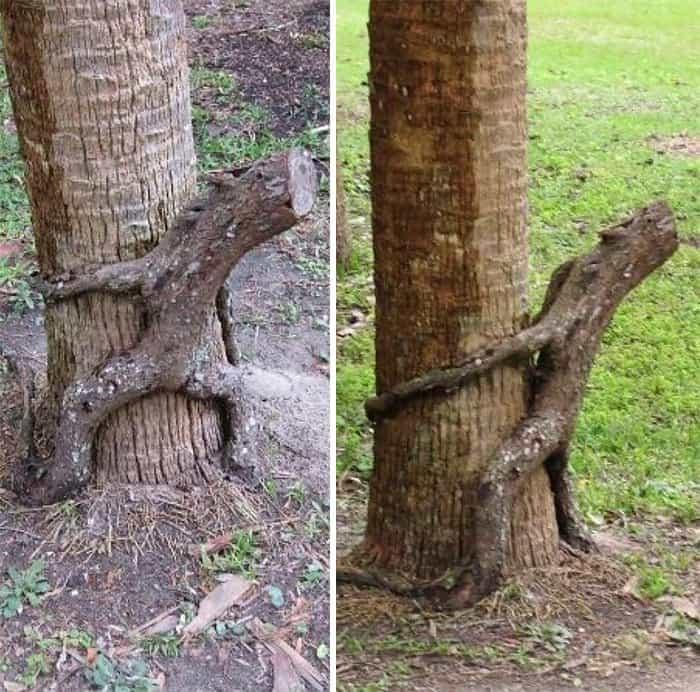 Trees That Look Like Something Else hugging