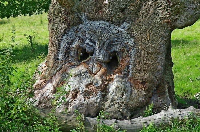 Trees That Look Like Something Else owl