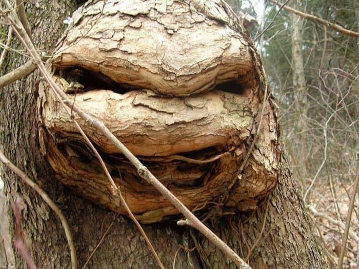 Trees That Look Like Something Else teenage mutant ninja