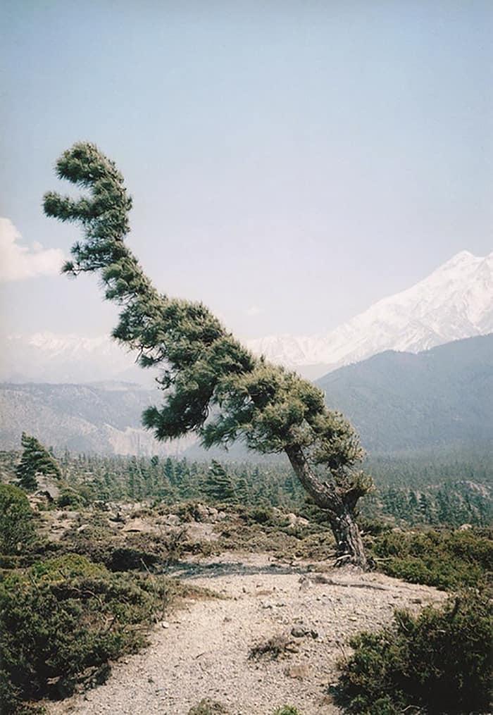 Trees That Look Like Something Else tree rex