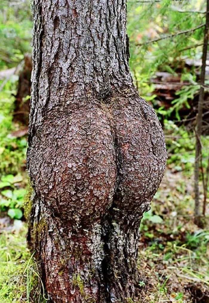 Trees That Look Like Something Else tree with bottom
