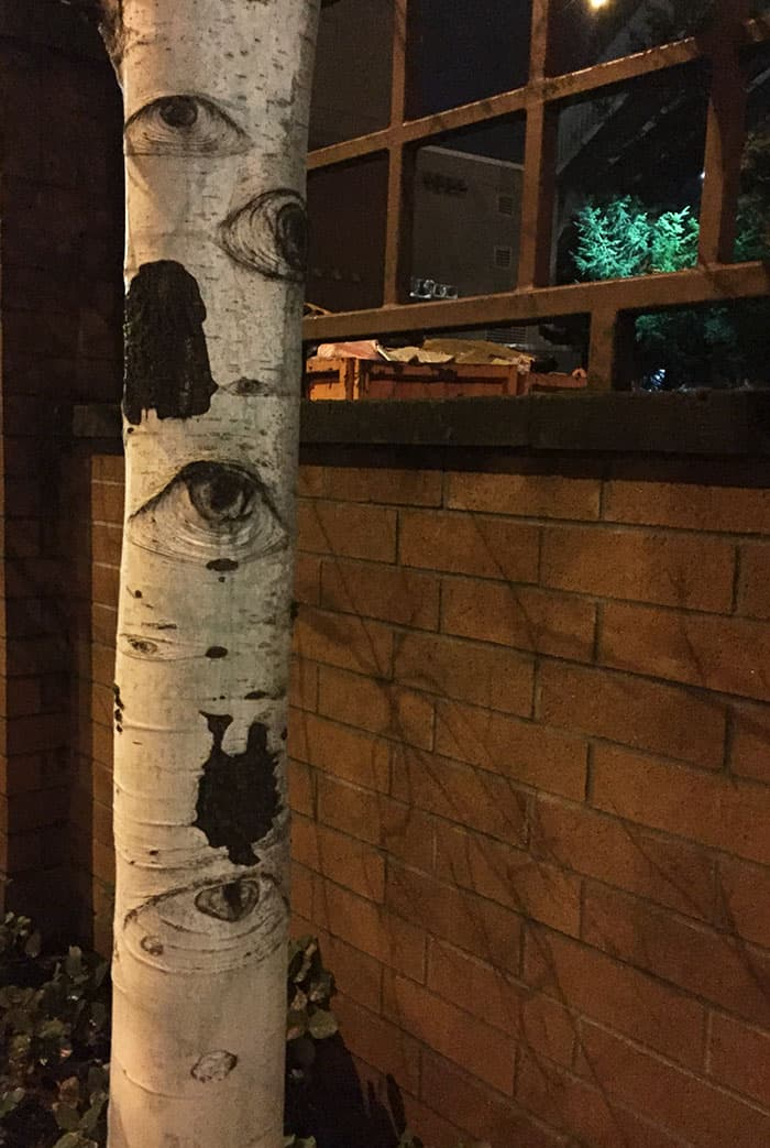 Trees That Look Like Something Else watching you