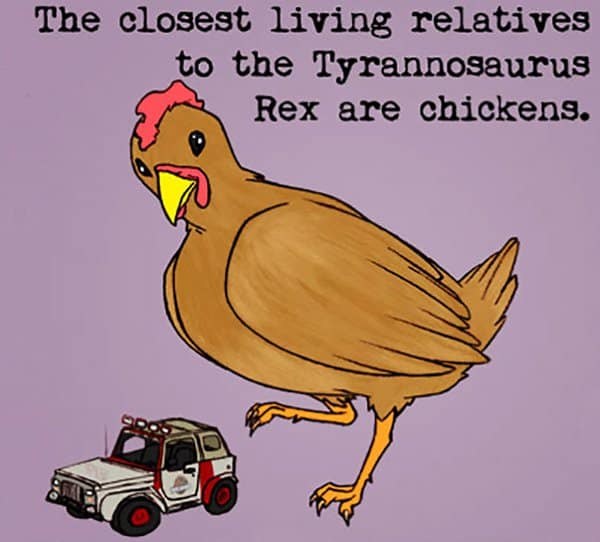 Weird Animal Facts chickens
