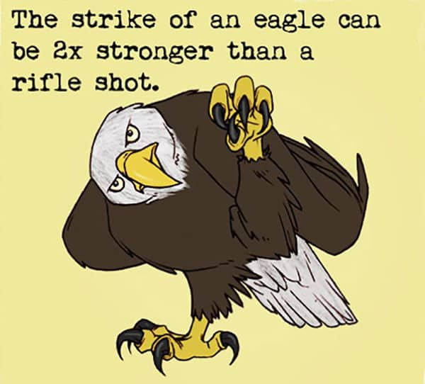 Weird Animal Facts eagle strike