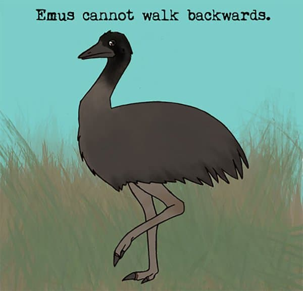 Weird Animal Facts emus