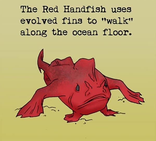 Weird Animal Facts red handfish