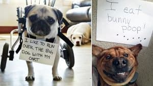 naughty-dogs-being-shamed