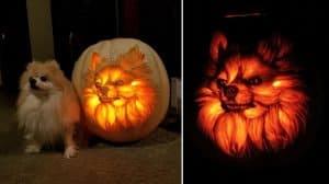 pumpkin-pomeranian-dog-o-lantern