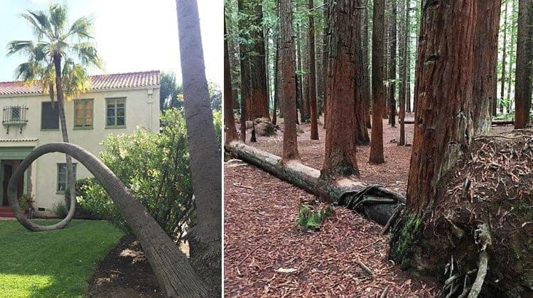 trees-that-refused-to-die