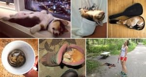Adorable Animals Sleeping In The Funniest Positions And Places
