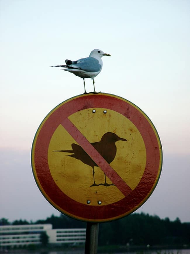 Anarchists Who Do Not Care bird on bird sign