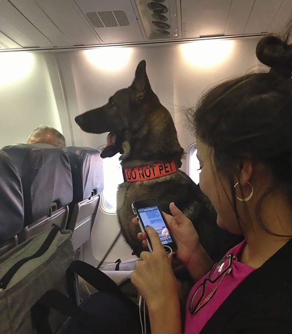 Animals On Flights bomb dog