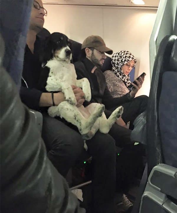 Animals On Flights dog sitting