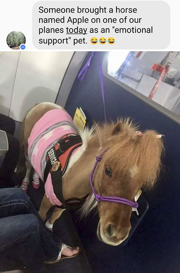 Animals On Flights emotional support pet