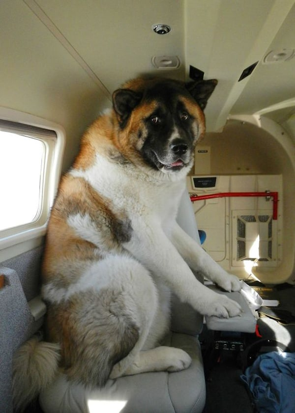 Animals On Flights rockys first flight