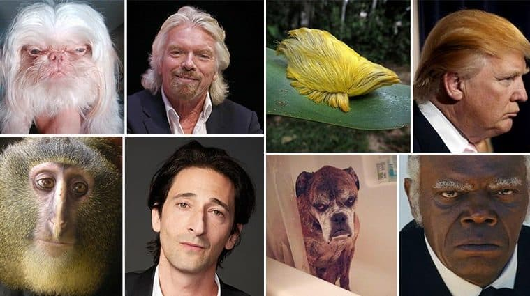 Animals Who Look Just Like Famous Celebrities