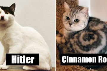 Cats That Have Crazy Fur Markings