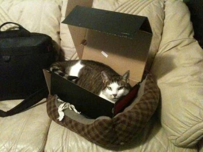 Clever Life Hacks cat cardboard box bed