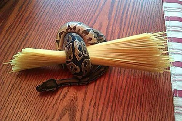 Crap Life Tips snake hold pasta