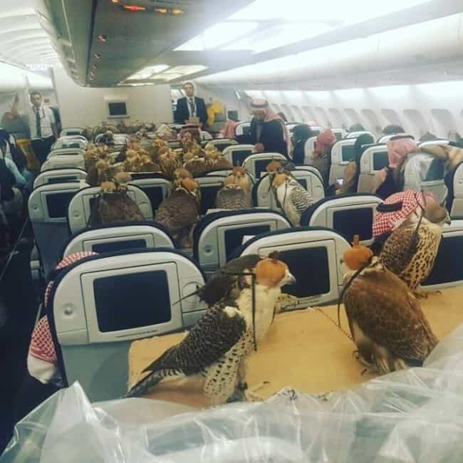 Crazy Things Spotted On Flights birds