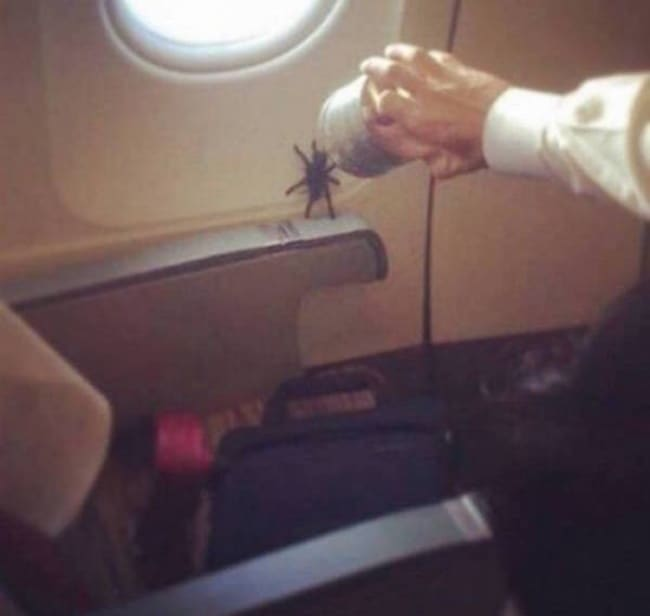Crazy Things Spotted On Flights spider