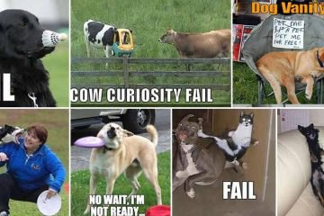 Funny And Random Animal Fails Caught On Camera