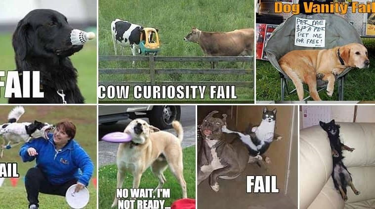 Funny And Random Animal Fails Caught On Camera
