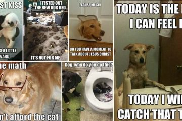Hilarious And Adorable Dog Memes To Put You In A Good Mood