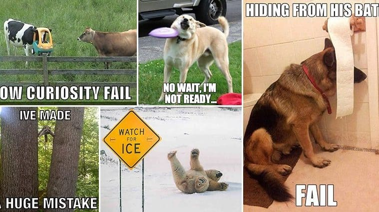 Hilarious Animal Fails That Will Brighten Up Your Day