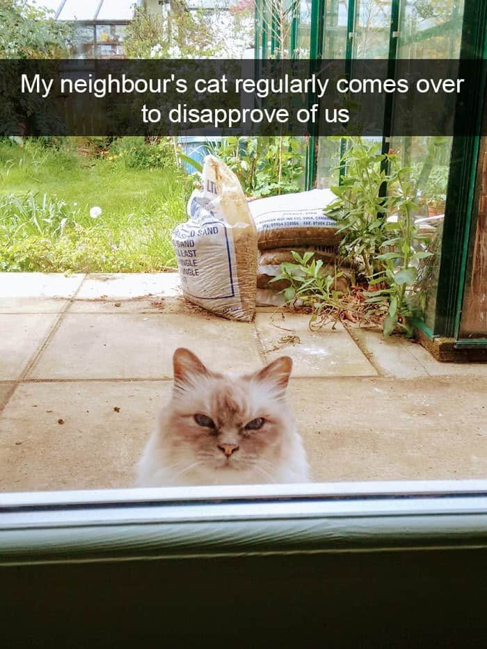 Hilarious Cat Snapchats disapprove