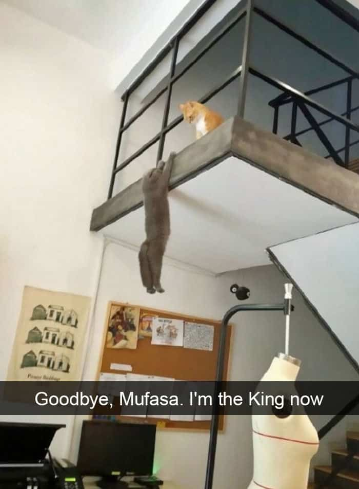 Hilarious Cat Snapchats goodbye mufasa