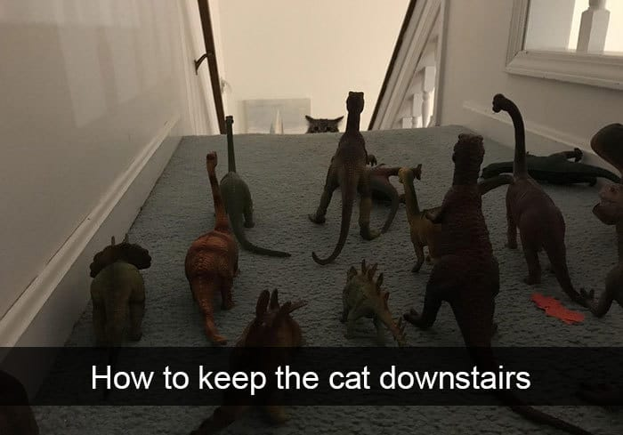 Hilarious Cat Snapchats how to keep cat downstairs