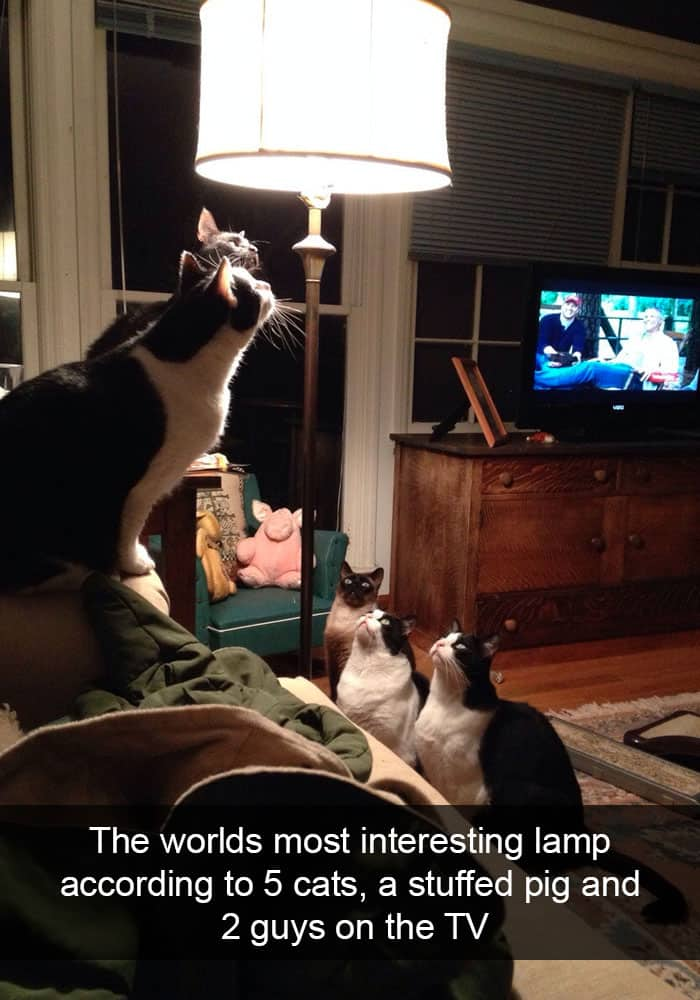 Hilarious Cat Snapchats interesting lamp