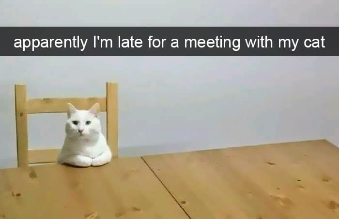 Hilarious Cat Snapchats late for a meeting with my cat