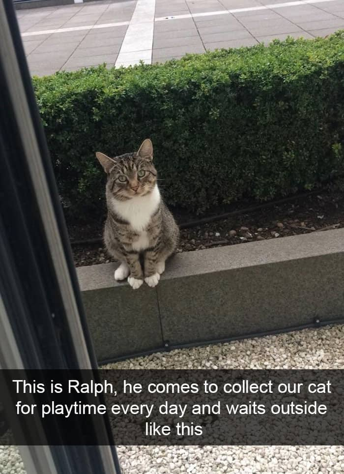 Hilarious Cat Snapchats play time