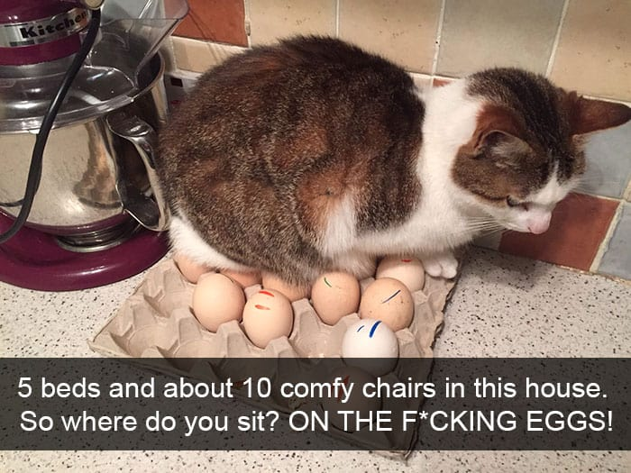 Hilarious Cat Snapchats sit on eggs
