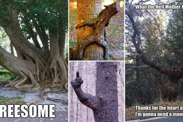 Hilarious Images Showing Some Of Mother Nature's Most Unique Trees