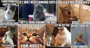 Hilarious Memes That Cat Lovers Everywhere Will Appreciate