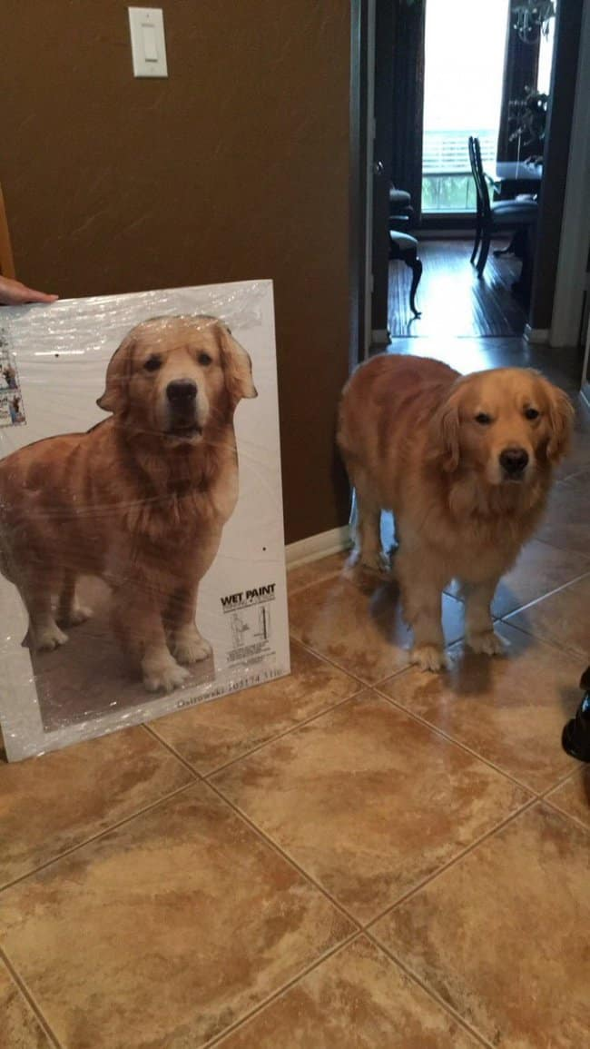 Moms Make Everything Better cut out of dog