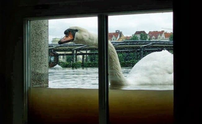 Photos Of Nature swan at window
