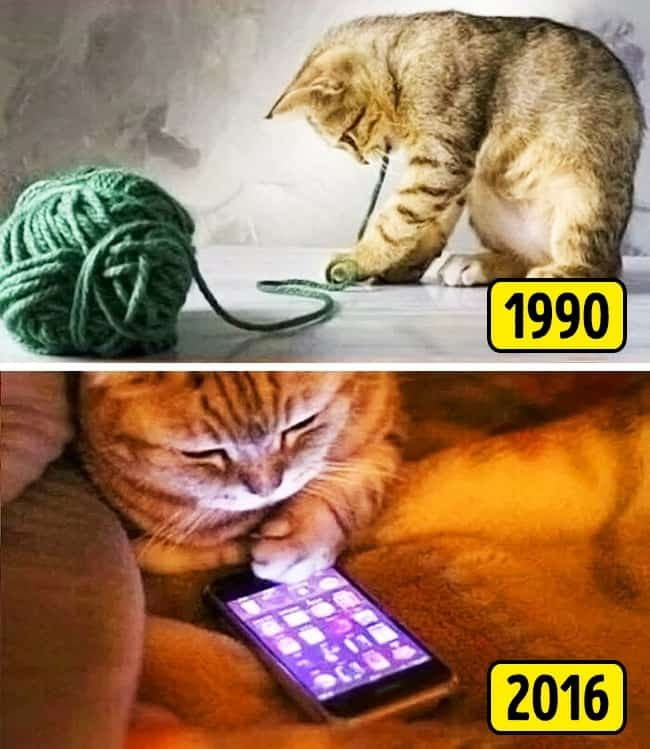 Things From The 90's simple pleasures cat