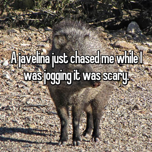 Things That Happened To Women Jogging javelina