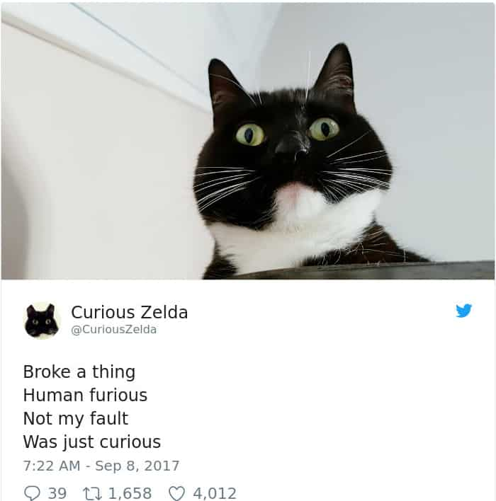 Tweets By Curious Zelda broke a thing