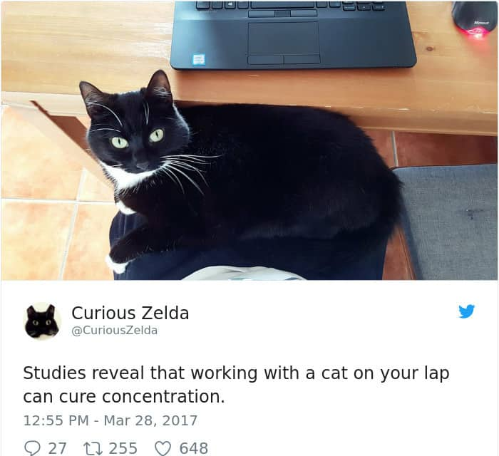 Tweets By Curious Zelda cute concentration
