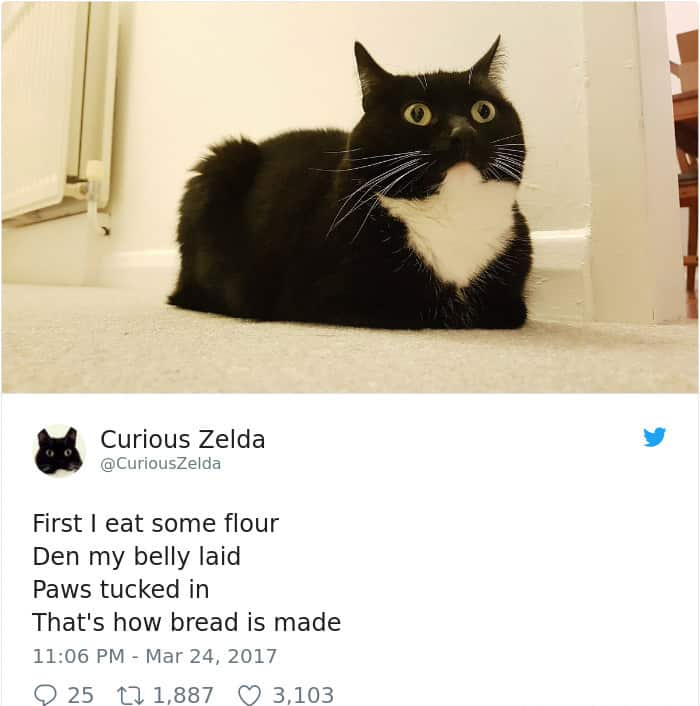 Tweets By Curious Zelda first i eat some flour