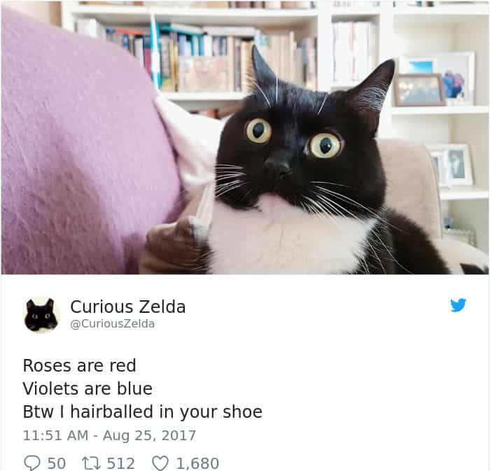 Tweets By Curious Zelda hairballed in your shoe